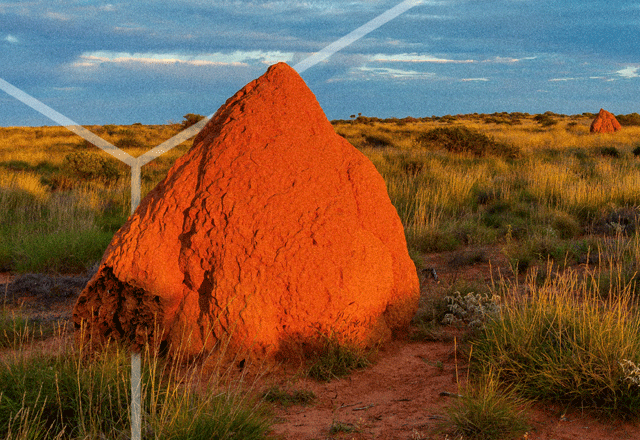 Large ant hill in the Australian outback.